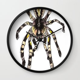 P. striata Wall Clock