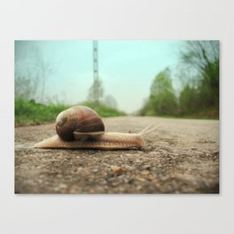 Snail on the road Canvas Print