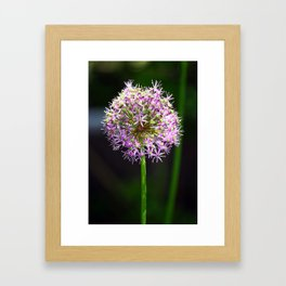 Allium Ball-shaped Onion Flower Framed Art Print