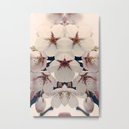 cherry blossoms - i Metal Print