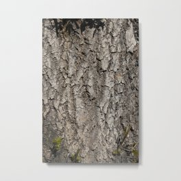 brown tree bark Metal Print