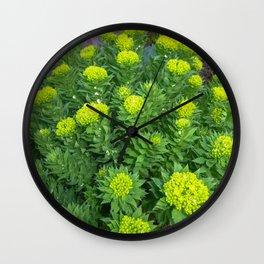 Rhodiola rosea blooms Wall Clock