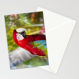 Green Winged Macaw Ara chloropterus Lahaina Maui Hawaii Stationery Cards