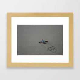 Leatherback Turtle Baby Framed Art Print