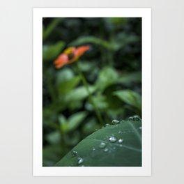 After the rain - Plants Photography Art Print