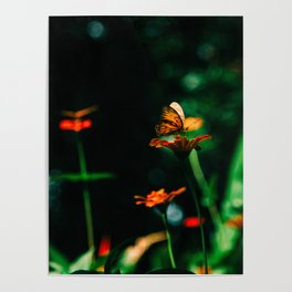 Butterfly Land Poster