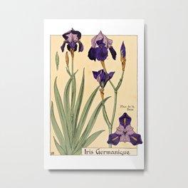 Maurice Verneuil - Iris germanique - botanical poster Metal Print
