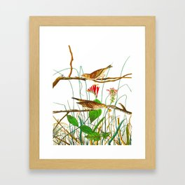 Savannah Finch Bird Framed Art Print