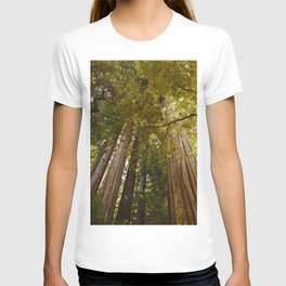 Redwood Forest T-shirt
