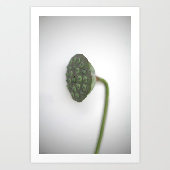 Lotus Fruit Pod Art Print