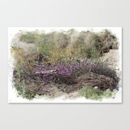 Digital Watercolor Spring Wildflowers at the Coachella Valley Preserve Canvas Print