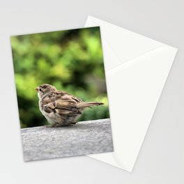 Little Feather Tasting Stationery Cards