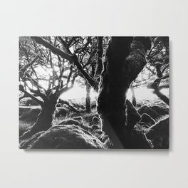 Ancient Forest Metal Print