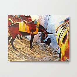 Donkey and dog 2 Metal Print