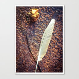 Rose and feather Canvas Print