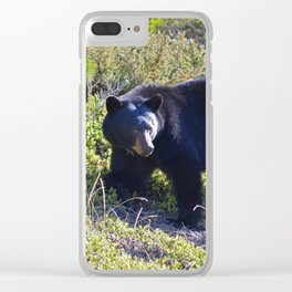 First black bear of the season Clear iPhone Case