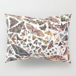 Moths of North America Pattern Pillow Sham