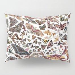 Moths of North America Pattern Pillow Sham