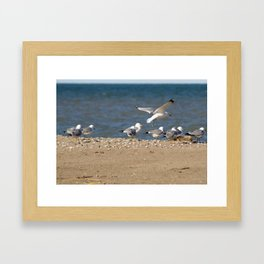 Landing | Seagull Photography Framed Art Print