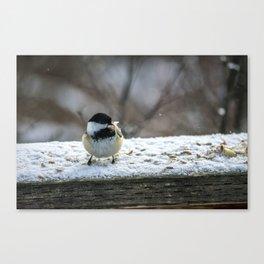Hungry Little Chickadee Canvas Print