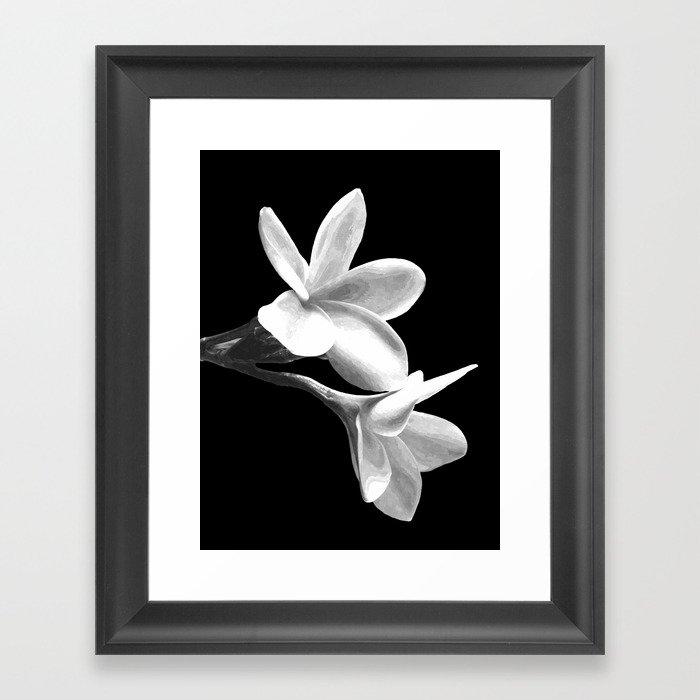 White Flowers Black Background Gerahmter Kunstdruck