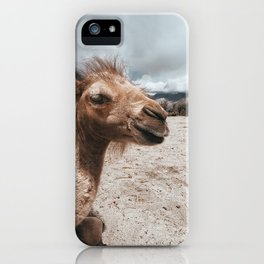 Baby Camel in Ladakh iPhone Case