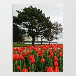 Tulips and the Trees by the Lake Poster