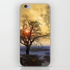 Tree in November sun iPhone & iPod Skin