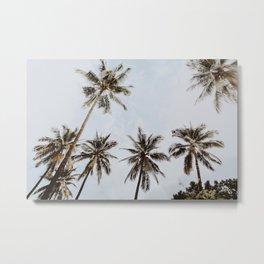 palm trees xiv / chiang mai, thailand Metal Print