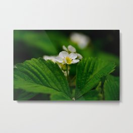 Strawberry Green Leaves Metal Print