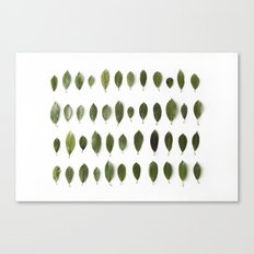 LEAVES COLLECTION Canvas Print