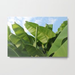 Banana Trees with Blue Skies, V38 Metal Print