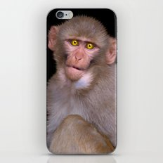 Young Rhesus Macaque Paintover Effect iPhone & iPod Skin