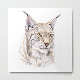 Lynx - Colored Pencil Metal Print