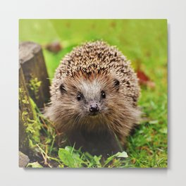 Cute Little Hedgehog Metal Print