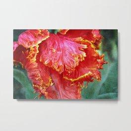 Flamenco Tulip Metal Print