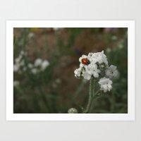 Azusa Canyon Ladybug Art Print