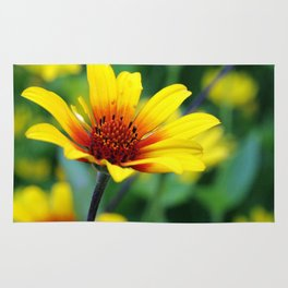 Prairie Flower II Rug