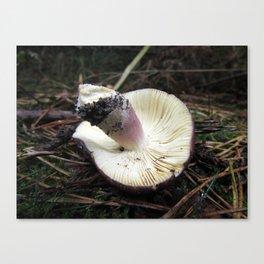 Mushroom Gills Canvas Print