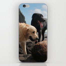 Two dogs playing iPhone Skin