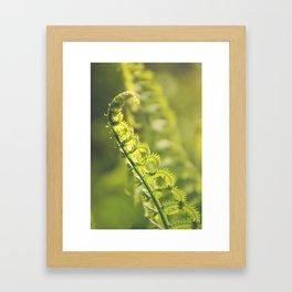 AFE Fern Framed Art Print