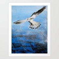 Black Shouldered Kite Art Print