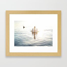 Swan Reflection Framed Art Print