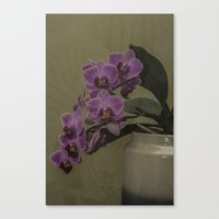 orchid Canvas Prints featuring Orchid by Steve Purnell