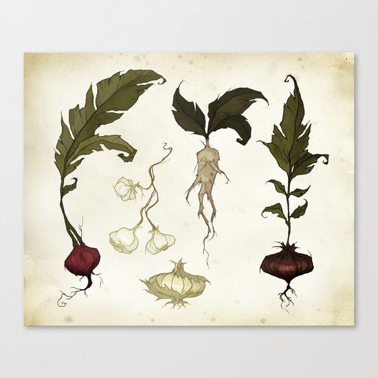 Root Vegetables Canvas Print