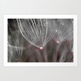 Salsify seeds Art Print