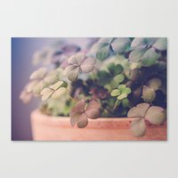 clover Canvas Prints featuring Clover by Juste Pixx Photography