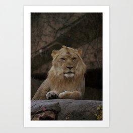 Lion! Art Print