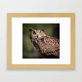 Portrait of an owl Framed Art Print