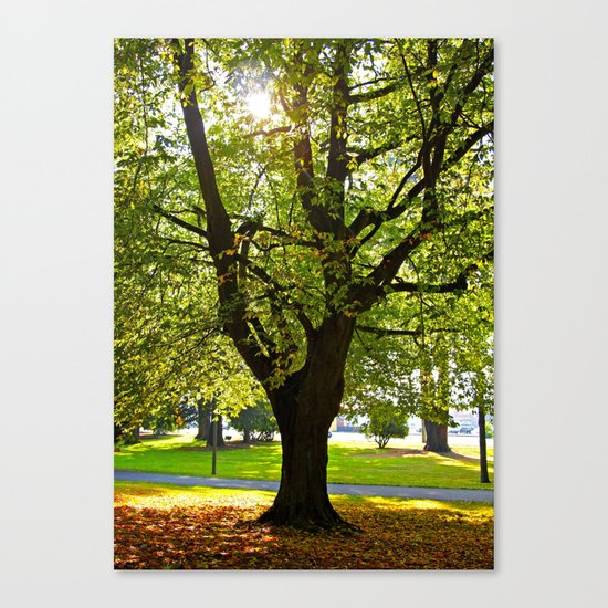 Autumn sun shines Canvas Print